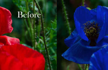 Photoshop Replace Color