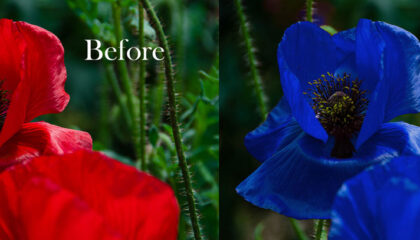 Photoshop Replace Color