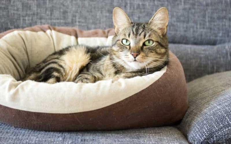 cat in a soft bed