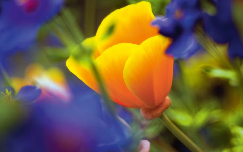 Flowers shot through another flower