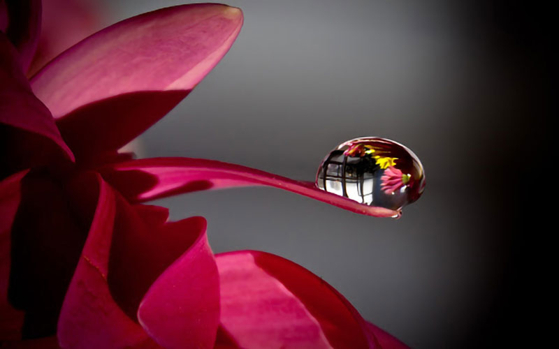 Flowers and water drops